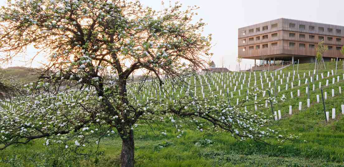loisium aussenansicht fruehling - LOISIUM Wine & Spa Resort Südsteiermark