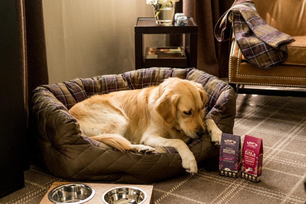 RosewoodLondon CaninePackage ©JamesBedford1 1024x683 - Reisen mit Hund! HOTELS ZUM (PUDEL-)WOHLFÜHLEN