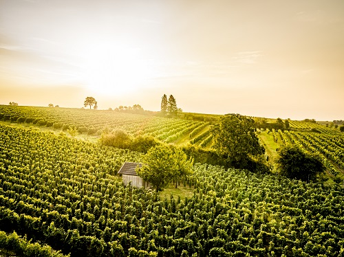 herbst 0194 - Vinophiler Kurz-Urlaub in den Poysdorfer Weingärten